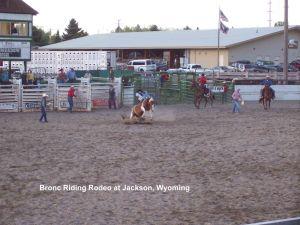 Bronc Riding Rodeo