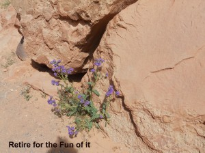 Capitol Reef purple flower